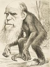 satira contro Darwin