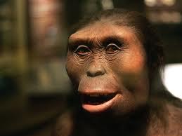 Ricostruzione al computer del volto di Lucy, scimmia australe della regione di Afar