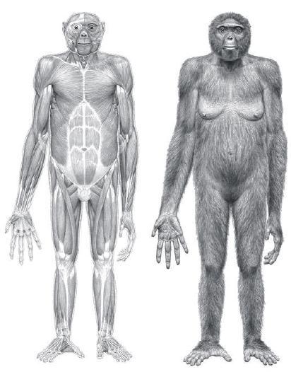 Ardipithecus ramidus - inizi del Pliocene