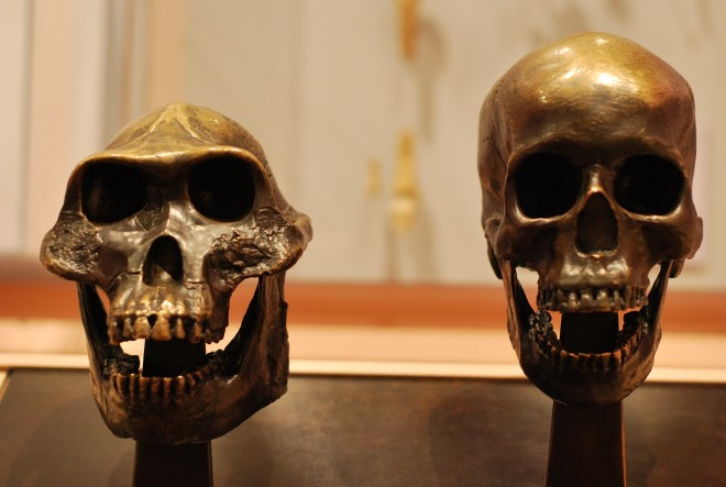 Homo sapiens e progenitore australopitecino
