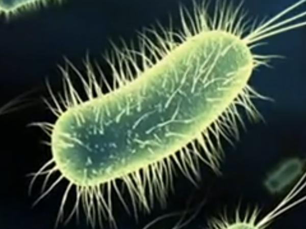 Organismo vivente: unitario, complesso, non composto, potente