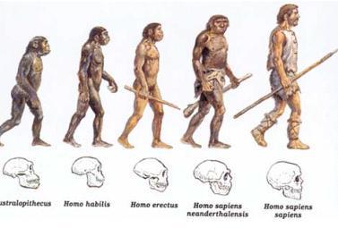 evoluzione umana