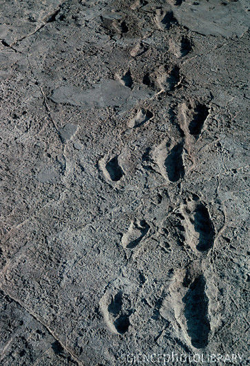 Laetoli (Tanzania), Orme di ominidi - 3 milioni e 700.000 anni fa