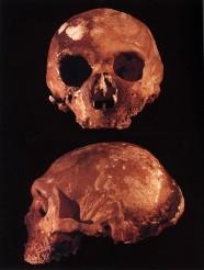 cranio Neanderrthal
