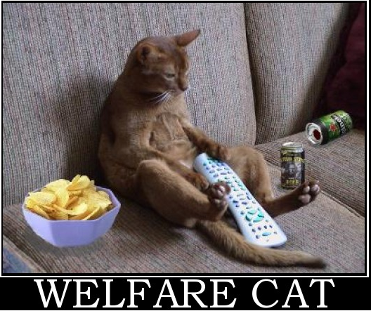 welfare-cat