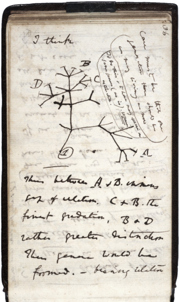 Darwin Tree, 1837